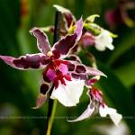 В Москве проходит III Фестиваль орхидей