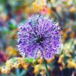 Короткий век цветка