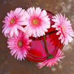 Сила цветов: летний фестиваль на