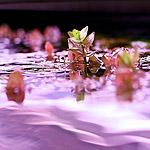 Аптекарский огород прирос водным царством