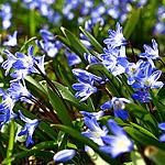 Весна в Аптекарском: началось!