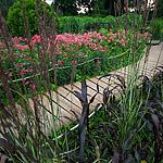 Розарий в Сокольниках: непрерывность цветения