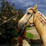 Я люблю свою лошадку: как в Коломенском отметили день Святых Флора и Лавра