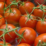 «Золотая осень»: агрофорум для профессионалов и агрошоу для всех