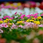 ГУМ расцвел ежегодным Фестивалем цветов